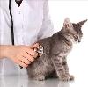 Ветеринарные клиники в Тюхтете